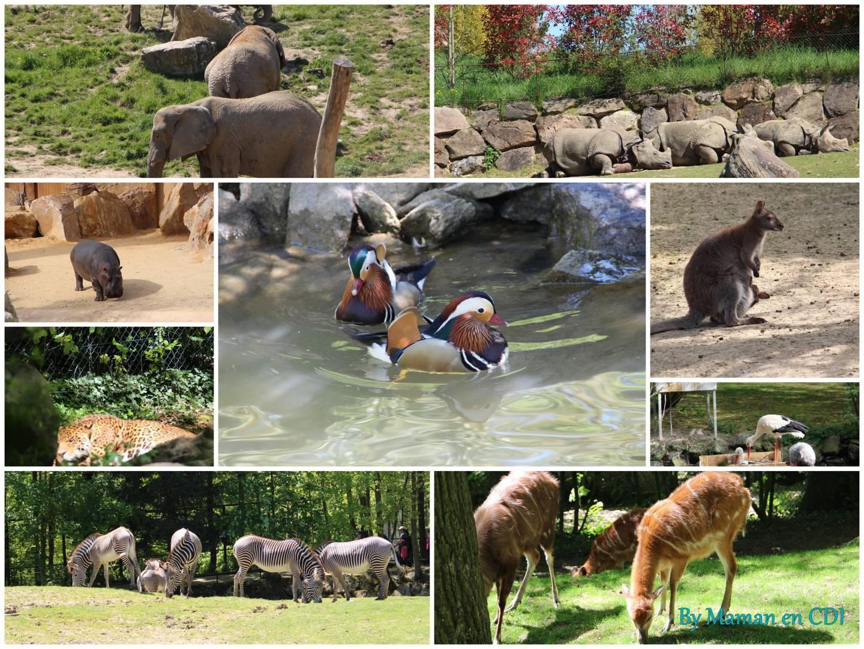 Zooparc de beauval annul danses et loisirs for Chambre zoo de beauval